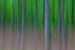 Streifenwald